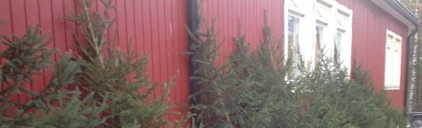 cropped-joulukuusi-myynti.jpg